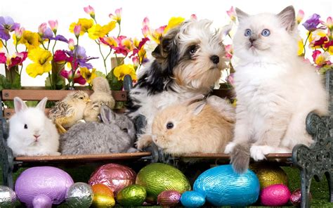 easter breaks with dogs hapy easter kitten puppy rabbits chickens eggs flowers