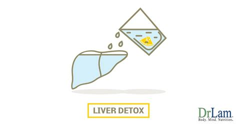 Signs That Liver Detox Is Working by Liver Detox Symptoms That Might Shock And And