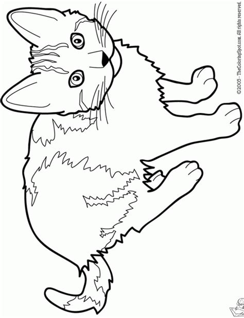 cats playing coloring pages free coloring pages of cats playing