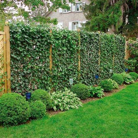 plant ideas for backyard 20 green fence designs plants to beautify garden design
