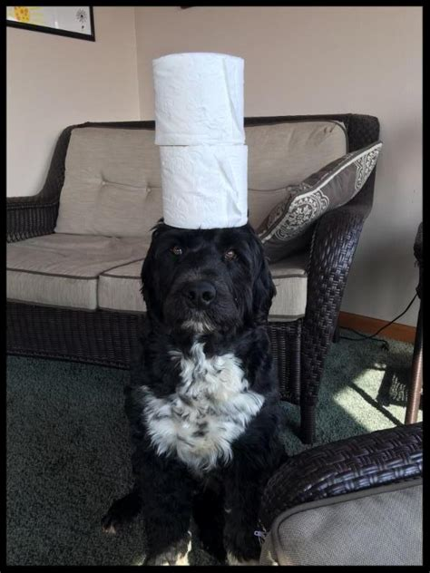 Toilet Paper Roll Challenge by Toilet Paper Roll Challenge Dogfacepet