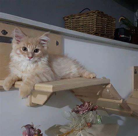 arredamento per gatti arredamento per gatti in legno athleticat it