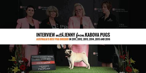 how much are pugs in australia w from kabova pugs chion pug breeder