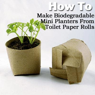 How To Make Toilet Paper At Home - how to make biodegradable mini planters from toilet paper