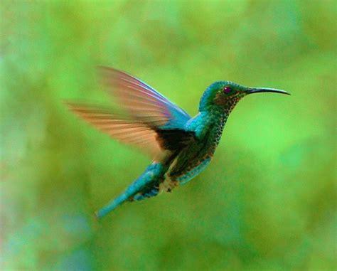imagenes increibles de colibries colibries sobran las palabras taringa