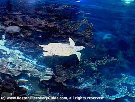 Boston Aquarium Gift Card - new england aquarium discounts rooms to rent for couples in london