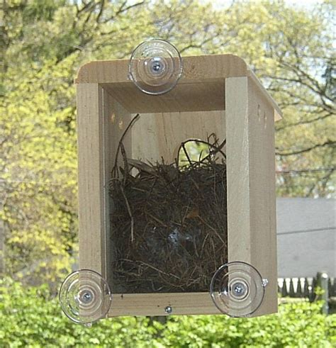 window bird box window bird houses window nest boxes for viewing nesting