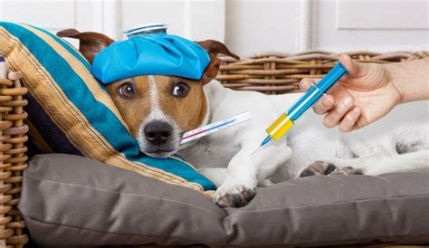 flu florida florida flu outbreak vets urge owners to vaccinate pets against highly contagious