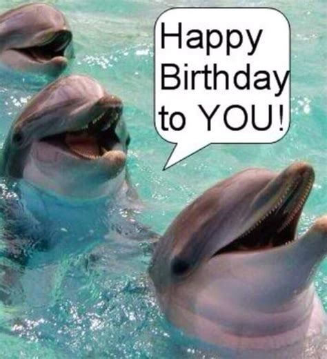 Happy birthday wishes with dolphin