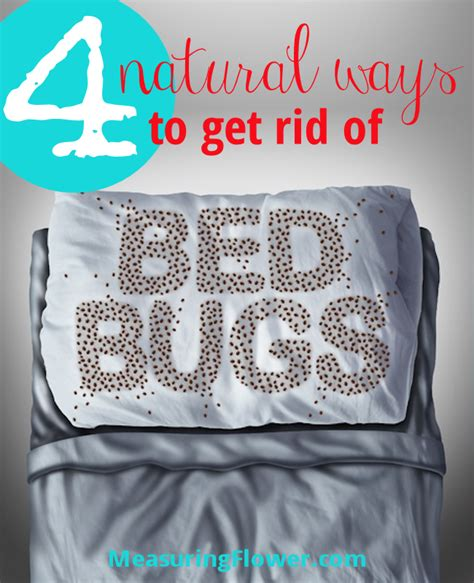 ways to get rid of bed bugs 4 natural ways to get rid of bed bugs measuring flower