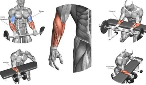 the best exercises for forearm nutribal