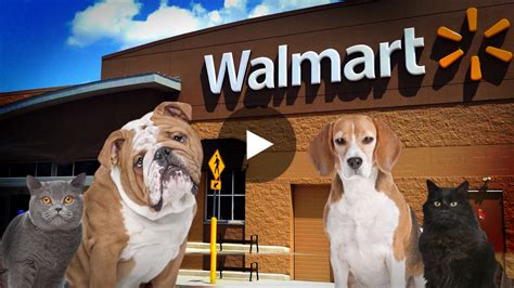 are dogs allowed in walmart walmart to allow shoppers to bring their pets with them to all stores this summer