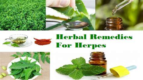 best herpes treatment best treatment for herpes with organic home