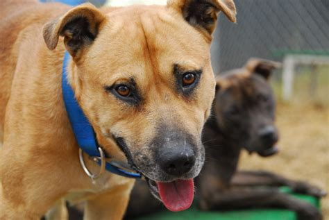 adopt a baltimore this account can help you adopt a pet technical ly baltimore