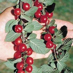 fruit edibles edibles