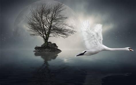 imagenes surrealistas tristes animals birds nature digital art cg manipulations surreal