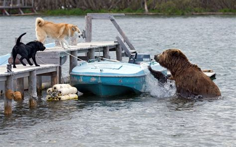 dog vs boat yeti coolers not all they are cracked up to be page 8