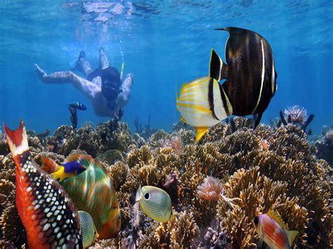 for snorkeling bali snorkeling bali diving