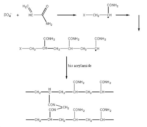 How Does Mba Cross Link Acrylamide by Techniques Electrophoresis