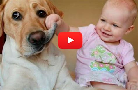 babies laughing at dogs we defy you not to grin for a whole 4min 35secs of babies laughing hysterically at