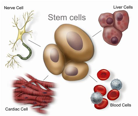 stem cell treatment now stem cell treatment now some alternative stem cell research stem cell research