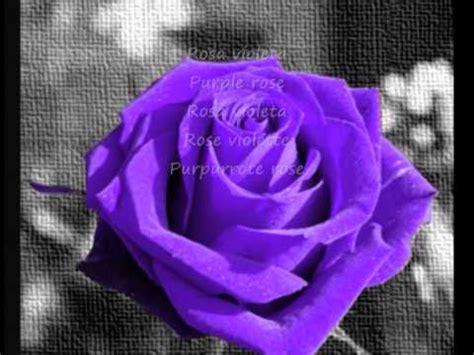 imagenes rosas de todos los colores rosas de distintos colores youtube
