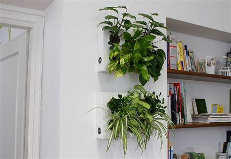 arredare con le piante da interno hoh 2 23978 pollicegreen