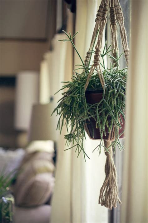 Macrame Hanging - beautiful macrame plant hanging design home design and