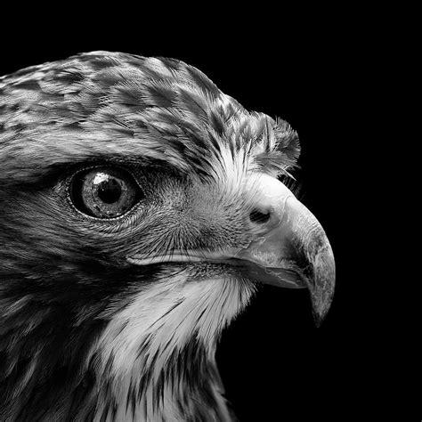 White Bird Black Bird black and white photos of birds impremedia net