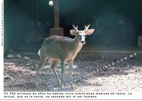 imagenes de animales endemicos biodiversidad de m 233 xico m 225 s especies en peligro de extinci 243 n