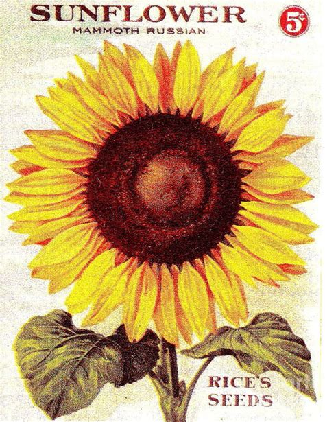 Vegetable Planterbag Sunflower Print 17 best images about seed packet on vintage seed packets sunflower seeds and