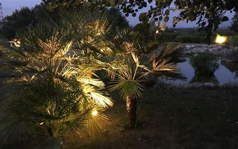 illuminazione alberi esempi di illuminazione alberi da giardino media arc