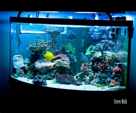 aquarium design book pdf aquarium by steve rich arts photography blurb books uk