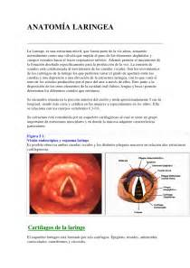 how to save a resume laringe anatomia resumen