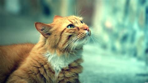 For Cats by Cat Wallpaper Hd Xpx Beautiful Cats 1920x1080px