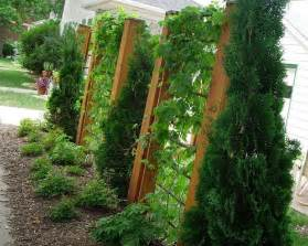 trellis privacy fence ideas 17 best ideas about arborvitae landscaping on