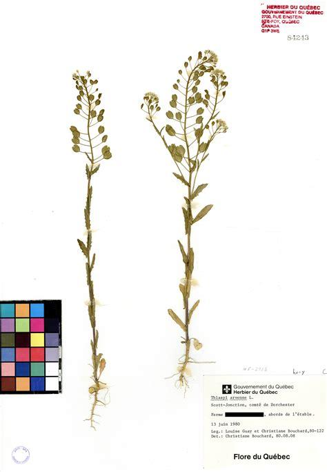 Tabouret Plante by Tabouret Des Chs Herbier Du Qu 233 Bec