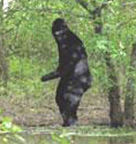 the of bigfoot bigfoot on bonne idee