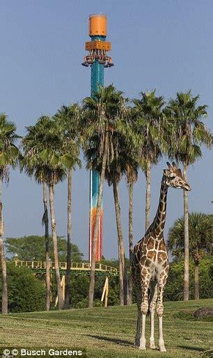 Fast Pass Busch Gardens by Florida Still Offers Thrills And Spills Aplenty Daily