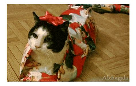 here are 25 christmas animals who are ready for the holidays