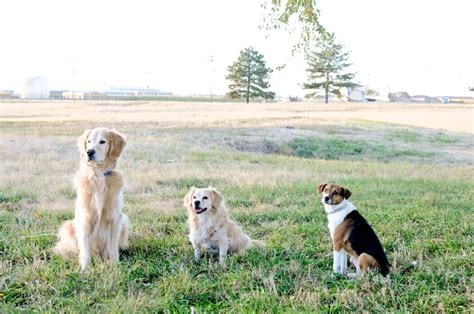 puppy zone and puppy zonecertified trainer