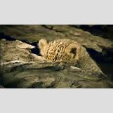 Surprised Baby Animals | 450 x 253 animatedgif 967kB