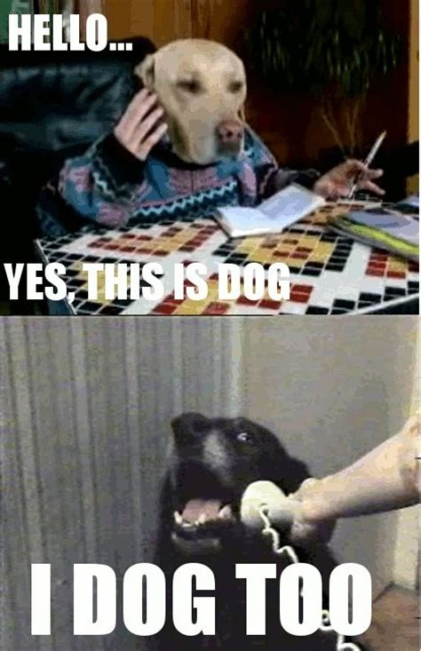 Hello This Is Dog Meme - yes hello this is dog comedy pinterest