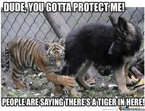 Tiger Meme - dude you gotta protect me funny tiger meme image