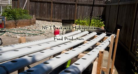 backyard hydroponics nft backyard hydroponics food production grozinegrozine