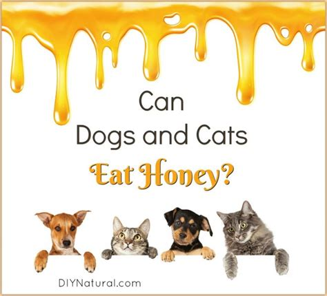 can dogs honey can dogs eat honey ways dogs and cats can and should honey