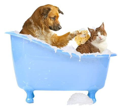 pet bathtub for dogs mickey s pet supplies blog shoos that are safe for