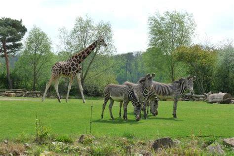 Zoologischer Garten Leipzig by Zoo Leipzig Bild Zoologischer Garten Leipzig