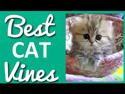 best and cat compilation 2014 2 best and cutest cat vines compilation 2014 2015