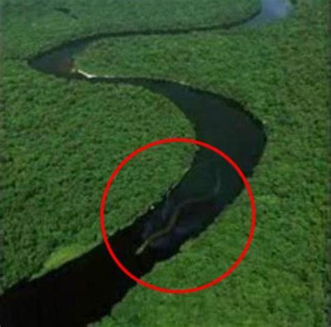 amazon river giant snake in amazon river